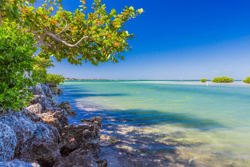 Palm Harbor-min